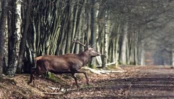 Interdiction de la chasse le dimanche