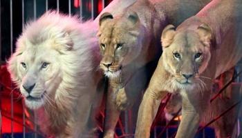 Plus de cirques avec animaux sauvages