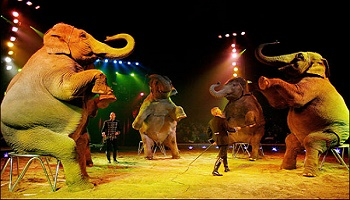 Pétition : Arrêt des cirques avec animaux à l'Isle sur la Sorgue