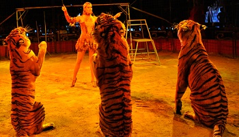 Arrêt des cirques avec animaux à Saint-Maximin-la-Sainte-Baume