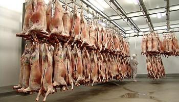 Stop aux massacres dans les abattoirs !