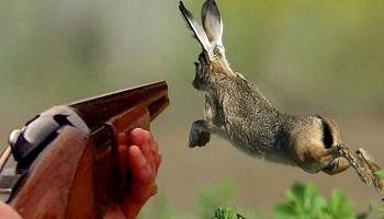 Pétition : Laissons la chasse tranquille