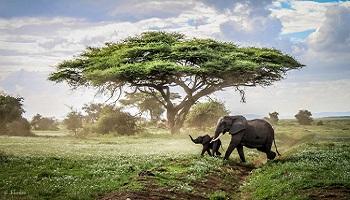 Pétition : Stop aux safaris et chasses en Afrique !