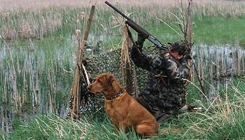 Pétition : Non au salon de la chasse, oui au respect de la réglementation de la réserve ornithologique