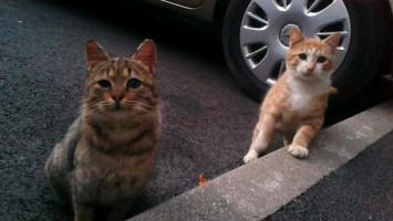 Pétition : Stérilisons les chats de rue !