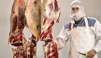 Pétition : Le respect du réglement pour l'abattage des animaux