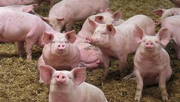 Non à un nouveau centre d'expérimentation animale à Bordeaux