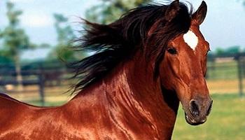 Non à l'abattage de chevaux !