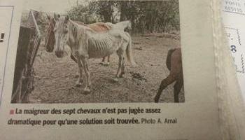 Pétition : Le sauvetage de sept équidés par leur confiscation, il faut enlever ces chevaux à leur ignoble propriétaire !