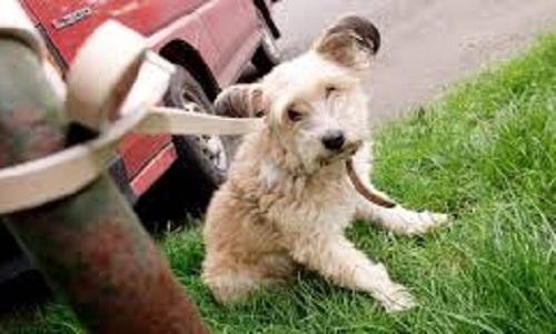 De meilleures lois pour les animaux