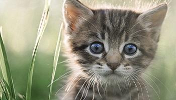 Justice pour ce chaton