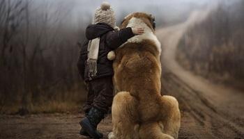 Sauvez des vies d'animaux