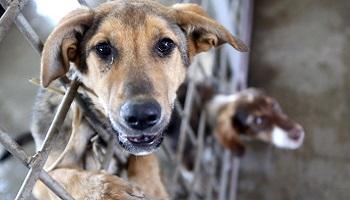 Pour le bien-être des animaux, que soient réintégrés les bénévoles radiés de la SPA 89 à Auxerre