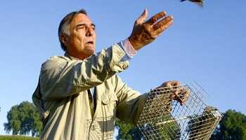 #SlipGate Arrêtez la tuerie des pinsons dans les Landes !