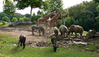 Des zoos plutôt que des cirques
