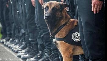 Pétition : #JeSuisChien Décoration de la Défense Nationale pour la chienne Diesel, abattue par des terroristes
