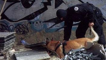 La légion d'honneur pour la petite chienne envoyée à la mort pour attraper les terroristes
