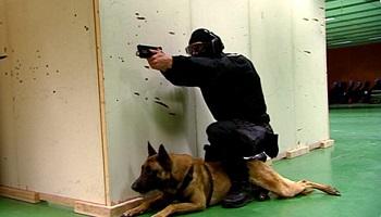 L'interdiction des chiens au RAID