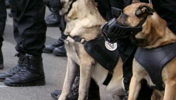 Pétition : Citation à l'ordre de la Nation pour Diesel la chienne de police abattue lors de l'assaut de St Denis