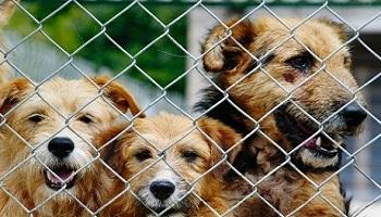 Sauvons les animaux de Guadeloupe