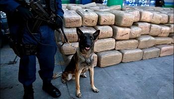 Pétition : L'interdiction d'utilisation des animaux renifleurs de bombes