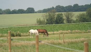 Sauvez les chevaux pour éviter l'abattoir !