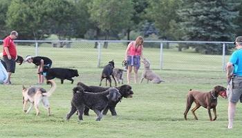 Ouvrir un parc canin sur Istres