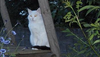 Retrouver mon chat que l'on m'a volé