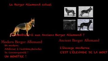 Stop à l'élevage canin moderne !