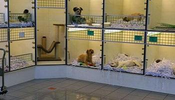 p tition interdire la vente de chiens et de chats dans les animaleries comme dans les. Black Bedroom Furniture Sets. Home Design Ideas