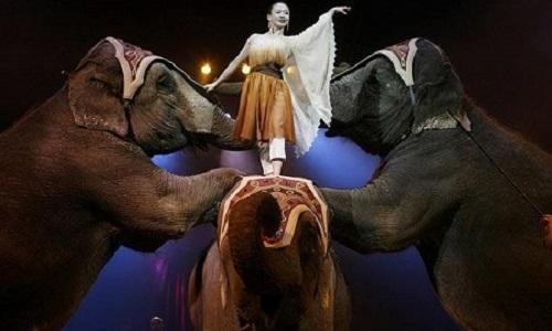 L'interdiction des cirques détenant des animaux sauvages sur le territoire municipal
