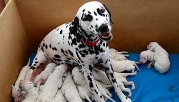 Retrouver et condamner le saisonnier responsable du massacre de ces chiens