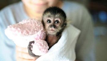 Stop à la vivisection !