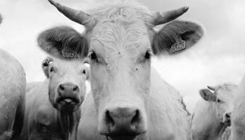 Pétition : Sauvons les vies animales contre la maltraitance et les abandons