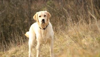 Pétition : Ne pas interdire certaines races de chiens