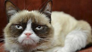 Pétition : Stérilisation des chattes errantes et non castration des chats errants !
