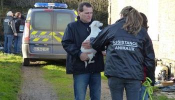 Pétition : Interdire la détention d'animaux à la propriétaire de la ferme de Crupilly (Aisne)