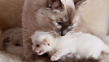 Pétition : Abolir la reproduction forcée des animaux de compagnie personnels