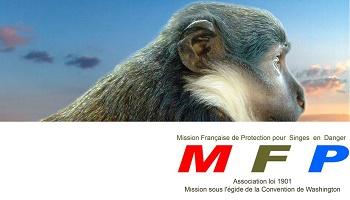 Demandons au centre de primatologie de Fort-Foch une convention éthique pour les singes de laboratoire !