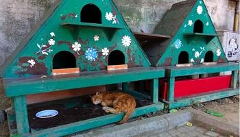Des abris pour les chats errants