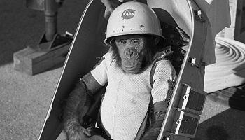 Interdire l'envoi de singes dans l'espace
