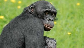 Pour l'interdiction du transport de primates de l île Maurice vers la France pour expérimentation !