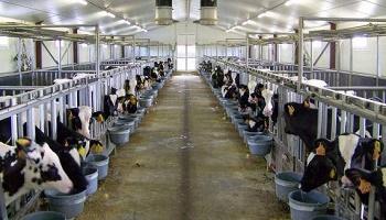 Pétition : Stopper l'extension de la ferme GAEC