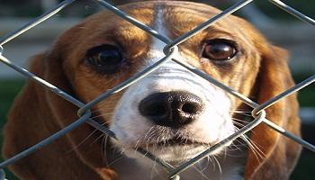 Arrêter l'euthanasie sur les animaux