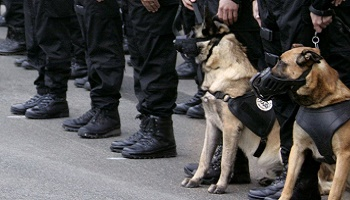 Légion d'honneur pour le chien DIESEL du RAID qui a laissé sa vie pour en sauver d'autres