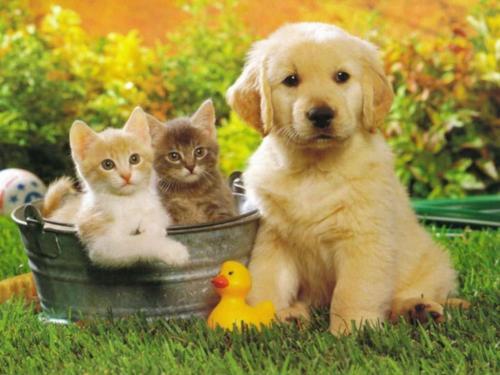 L'interdiction des propositions de saillie de chiens sur leboncoin