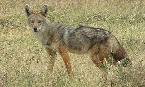 Pétition : Inscrire une nouvelle espèce dans la liste des mammifères protégés