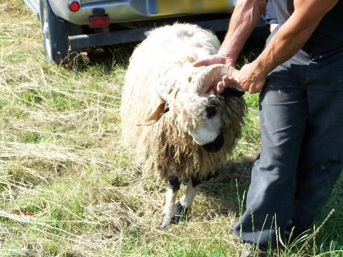Stop aux opérations utilisant des animaux à des fins mercantiles