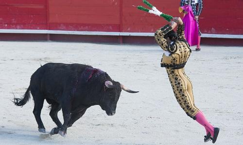 Demandez des enquêtes approfondies sur les cruautés commises avant les corridas !