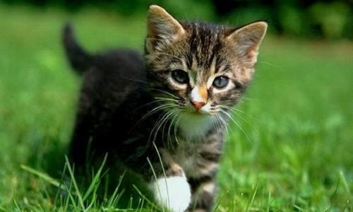 Protegeons nos chats domestiques !